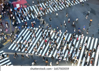 Tokyo, Japan- October 2019; High angle view of people on the crossing of Shibuya intersection just outside the train station