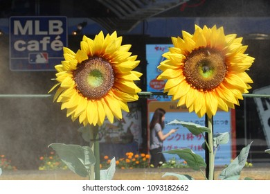 TOKYO, JAPAN - September 9, 2017: Artificial flowers emitting mist to cool down visitors at Tokyo Dome City on a hot late summer day. The MLB cafe a baseball-themed eatery is in the background.