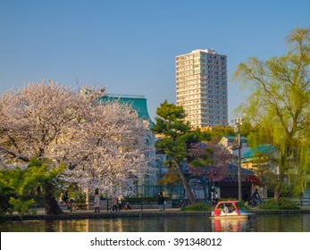 TOKYO - MARCH 28: Cherry blossoms in full bloom at Shakujii Park on March 28, 2013 in Tokyo, Japan. Shakujii Park is one of the most famous place to see cherry blossoms in Tokyo.