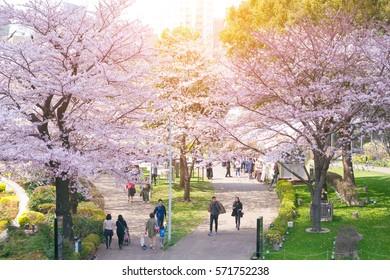 TOKYO MIDTOWN, JAPAN - APRIL 1ST, 2016: Unidentified tourists enjoy the spring sakura cherry blossoms