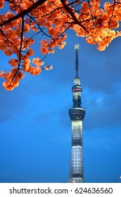 Tokyo Skytree on the Horizon Framed by Branches of a Cherry Blossom Tree - April 2013 - Tokyo, Japan