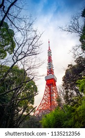 Tokyo Tower with lush tree.