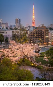 Tokyo tower and Sakura tree in the Mori garden view taken from Ropppongi hills, Tokyo, Japan - March 29th 2018
