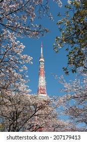 Tokyo Tower thru Cherry Trees