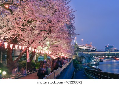 TOKYO,JAPAN- April 3 : Illumination cherry blossom by the Sumida river in Hanami festival on April 3, 2016 at Sumida in Tokyo, Japan.