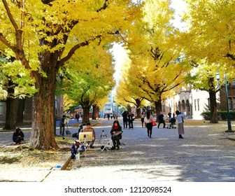 Tokyo/Japan-November 24,2017:  The activities of people in the Autumn are drawing and take a picture with the Ginkgo at the Tokyo University which change colors to the yellow.
