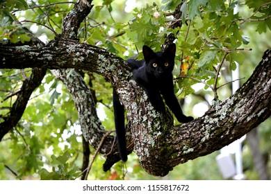 Tom Cat Tom Kitten