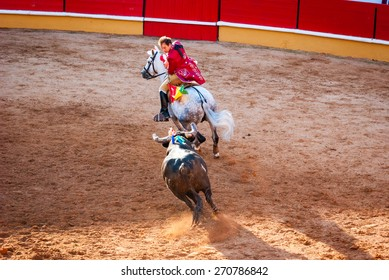 """TOMAR, PORTUGAL - OCTOBER 24: Cavaleiro on the horse fight with the bull and stabbing """"bandarilha"""" to the bull in portuguese style bullfighting in Tomar on October 24, 2010"""