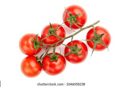 Tomato. Tomato branch. Tomatoes isolated on white.