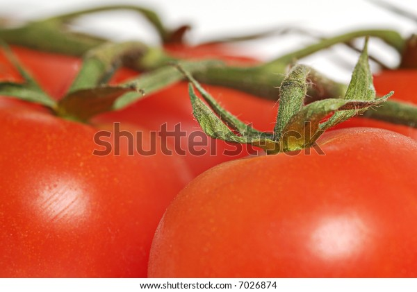 tomato on the vine with white background