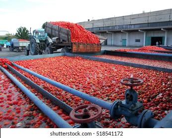 Tomato paste processing plant