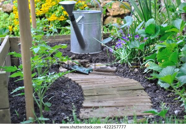 Tomato Plants Vegetable Garden Tools Stock Photo Edit Now 422257777