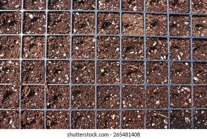 Tomato seeds in a nursery flat filled with soilless potting media