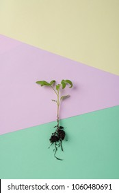 Tomato sprout in the ground against a background in pastel colors for the garden season