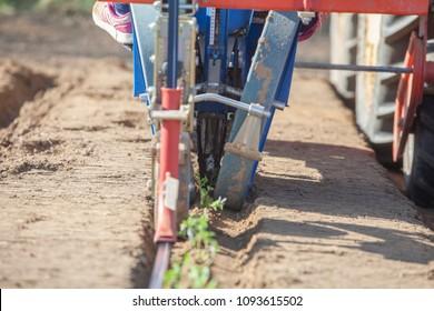 Tomato transplanter machine inserting seedlings on ground. Tomato planting process from greenhouse to farmland