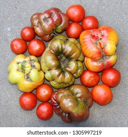 Tomatoes in a circle