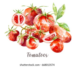 Tomatoes illustration. Hand drawn watercolor on white background.