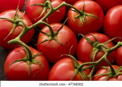 Tomatoes on vine with soft lighting