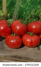 Tomatoes on wooden table. Heap of fresh tomatoes on wooden table. Natural  product concept. Macro food background. Dwarf firebird sweet tomatoes