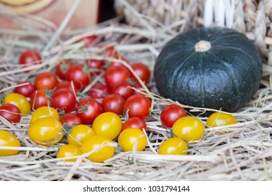 Tomatoes and pumpkin in the farm.