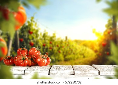 Tomatoes and summer day