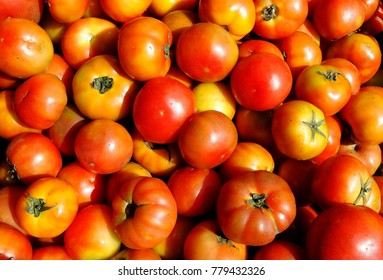 Tomatoes-Solanum lycopersicum, food of the family basket, Antioquia, Colombia