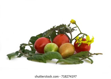 Tomatos on white background