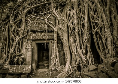 Tomb Raider tree in Cambodia, Siem Reap, Angkor Wat