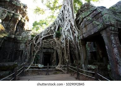 Tomb Raider Tree in Ta Prohm Temple, Temples of Angkor, Cambodia