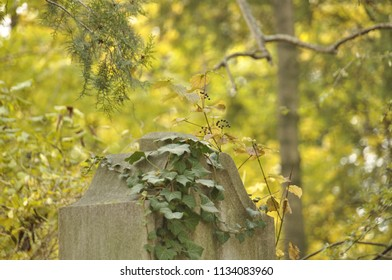 a tombstone surrounded by all kinds of plants and trees