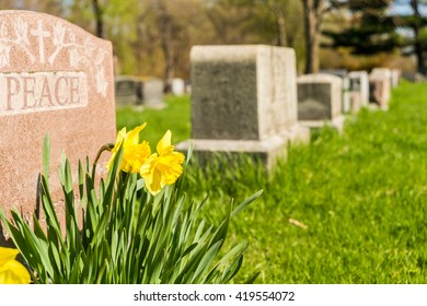 Tombstones in Montreal Cemetary with yellow jonquils in springtime with peace carved on a headstone