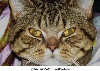 Tomcat.Portrait of my cat