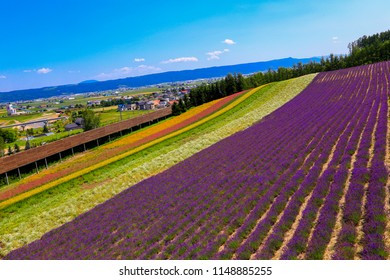 Tomita Farm is a farmland located in Furano-cho, Hokkaido. Lavender and various colorful flowers are planted on the farm, and they are in their full glory from spring to autumn.
