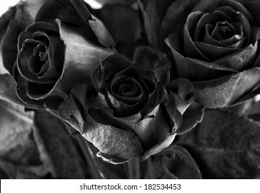 toned high contrast roses closeup