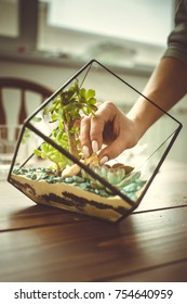 Toned image florist webinar on making of florarium with stones and succulents