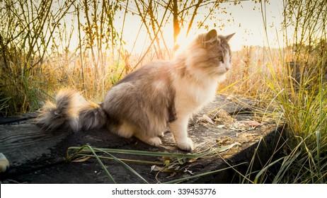 Toned photo of cat sitting on log at lake at sunrise