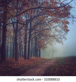 Toned sad background images stock photos vectors shutterstock toned picture of sad and mystery autumn landscape with lonely tree at the end of footpath voltagebd Image collections