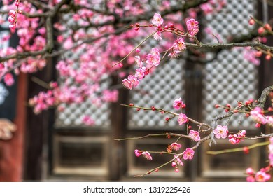 Tongdosa temple Plum Flower Blossom. Famous plum flower spring blossom in Tongdosa Temple . The temple is famous UNESCO site located in South Korea.