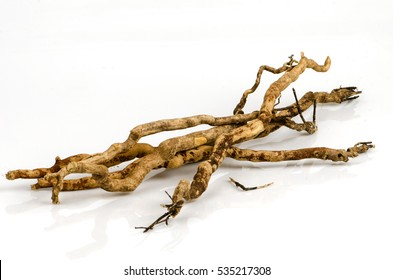 Tongkat ATongkat Ali (Eurycoma longifolia jack) Medicinal herbsli (Eurycoma longifolia jack) Medicinal herbs.