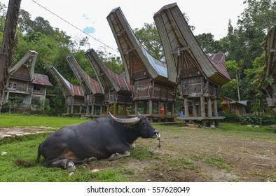 Tongkonan traditional houses in Tana Toraja, Sulawesi, Indonesia