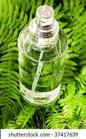 Tonic Water in the Fern Leaf
