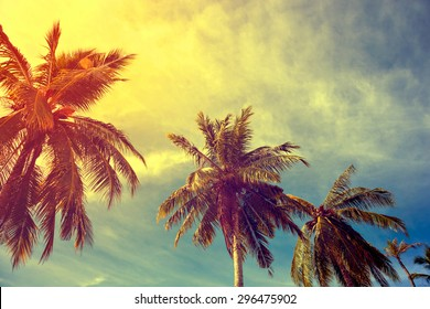 toning vintage instagram under palm trees against a blue sky with clouds in the Caribbean Maldivian Hawaii