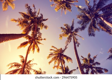 toning vintage under palm trees against a blue sky with clouds in the Caribbean Maldivian Hawaii. Palm trees at tropical coast, vintage toned and film stylized. Palm trees a over bright sky background