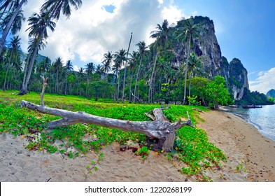 Tonsai beach, between Ao Nang beach and Railay beach in the Andaman Sea, Krabi province, Thailand