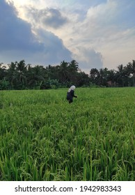 I took this photo while walking with my friends in the rice field embankment, it is very nice to be in the village with cool air and beautiful scenery - Shutterstock ID 1942983343