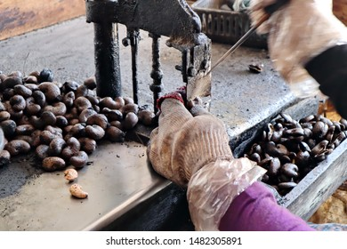 Tools for peeling cashew nuts in processing plants in Uttaradit Province,Thailand.