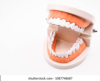 Tooth model isolated on white background. Denture.