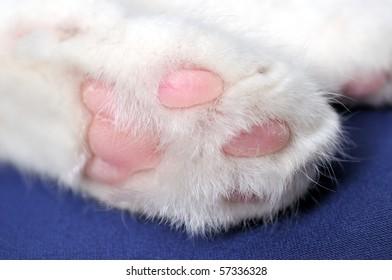 Tootsie of a white cat.