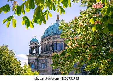 Top of Berlin Cathedral (Berliner Dom) in the frame of pink chestnut blossom, Berlin, Germany