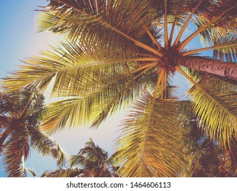 Top of Coconut palm tree on sky background. View from bottom. Summer vacations
